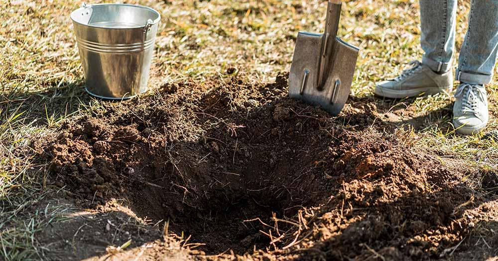 Một số cách kiểm tra và phân loại đất trồng