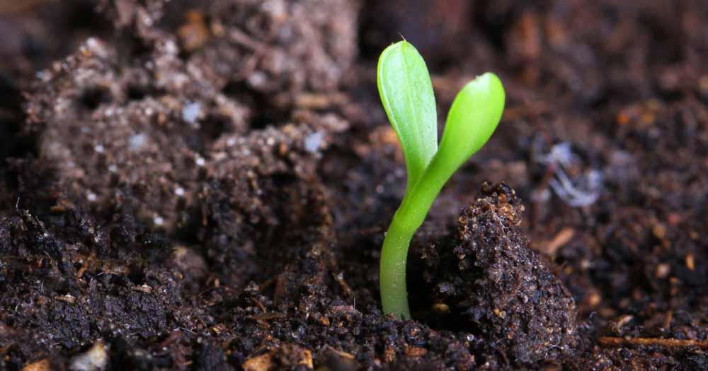 Tối ưu hóa đất đúng cách hỗ trợ cho trồng trọt hiệu quả